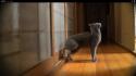 Kočičí klepání na dveře