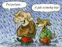 OBRÁZKY - Kreslené vtipy CXII.