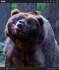GALERIE - Ulítlé zvířecí obličeje #3
