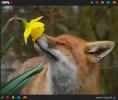 GALERIE - Zvířata obdivující vůni květin
