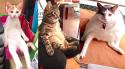 GALERIE - Sedící kočky