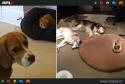 GALERIE - Kočky vládnou psům