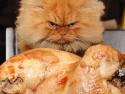 GALERIE - Nakrknuté kočky