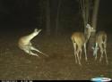 GALERIE - Šílený noční život zvířat