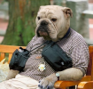 GALERIE – Psi oblečení jako lidi