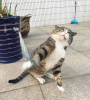 GALERIE - Šílené výrazy slavného kocoura
