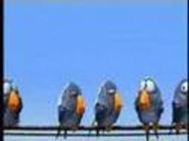 Animace - ptáci