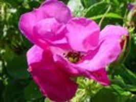 Zrychlené záběry rostlin a květů
