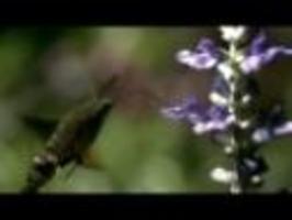 Slow motion - Zvířata jak je nevidíme