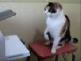 Kompilace - Prostě a jednoduše kočky