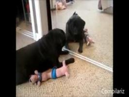 Kompilace - Zvířata vs. zrcadlo