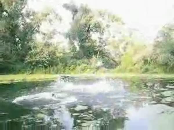 Domácí video [kompilace] 1