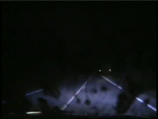 Policejní auto vs. srnka