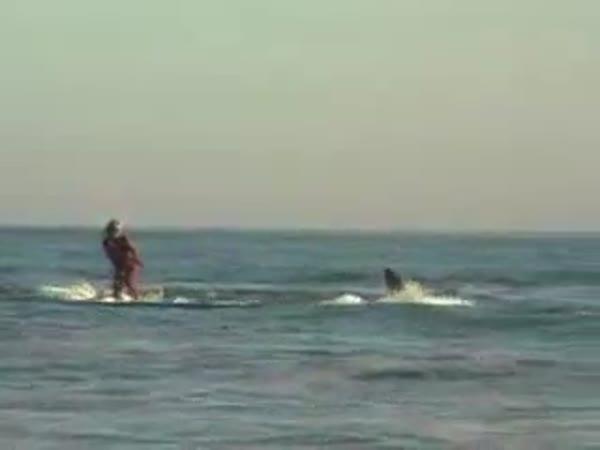 Adrenalin - Surfing se žralokem