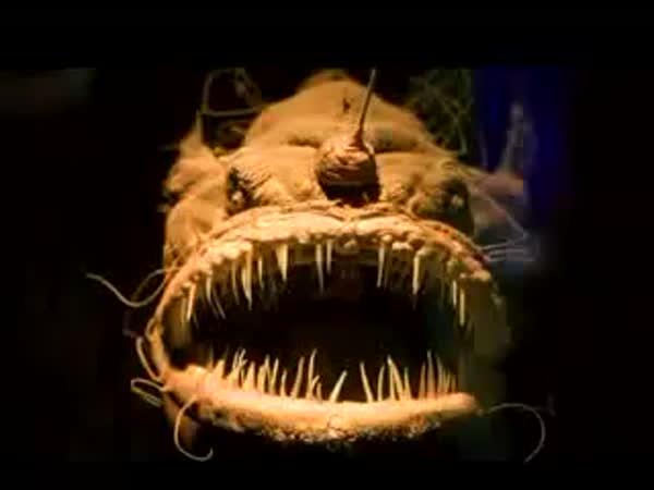 TOP 10 - nejošklivější ryby
