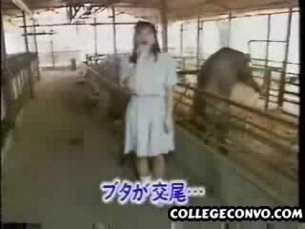 Japonsko - reportáž z vepřína