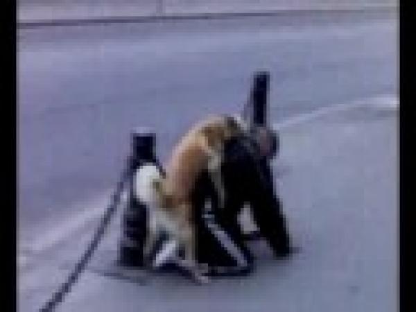Opilý muž a nadržený pes