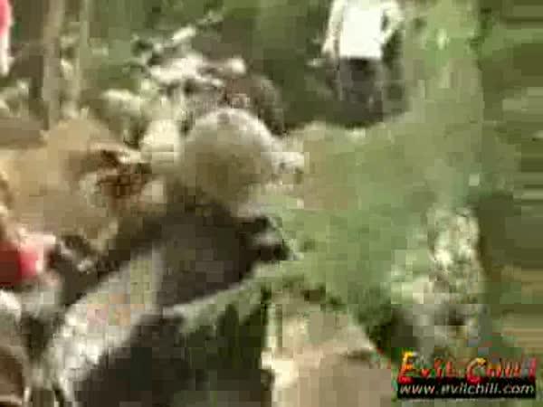 Závod čtyřkolek - rvačka