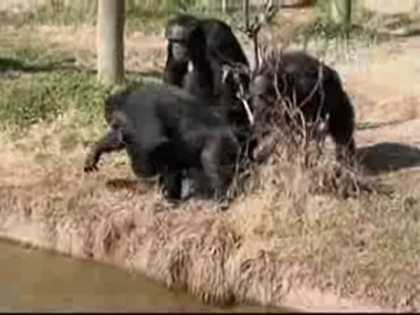 I opičky se mají rádi