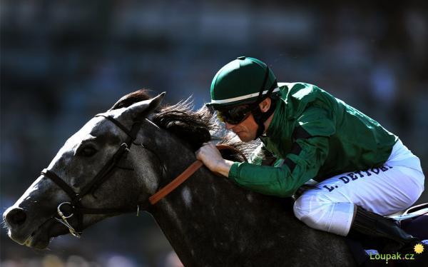 Koně - sport, práce krása