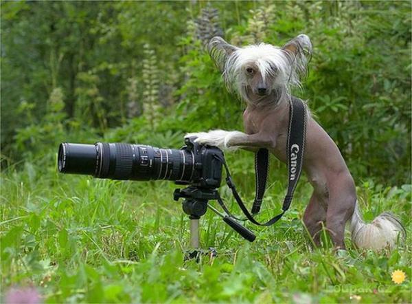 OBRÁZKY -Těžká práce fotografa II.