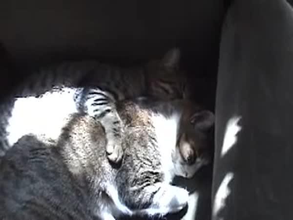 Charley - postižená kočička