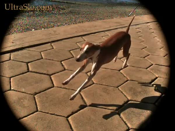 Slow motion - Běžící pes