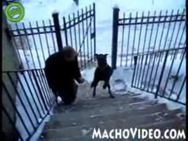 Pejsek chodí po schodech po 2 nohách