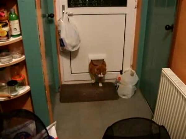 Vykrmená kočička a dveře