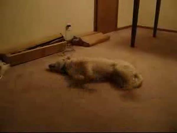 I pes může mít divoký sen