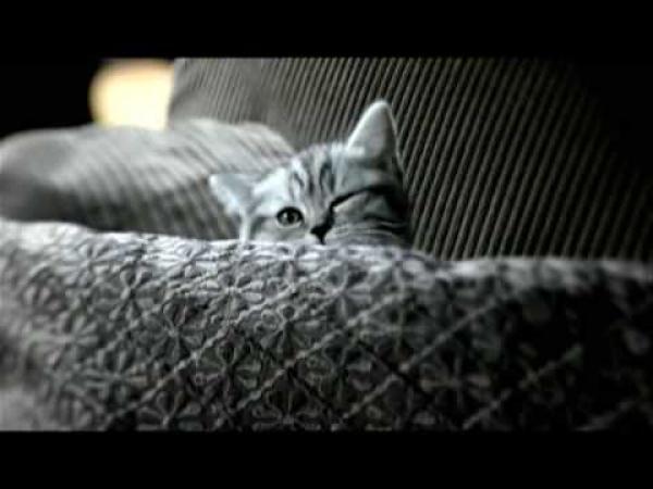 Roztomilé koťátko [reklama]