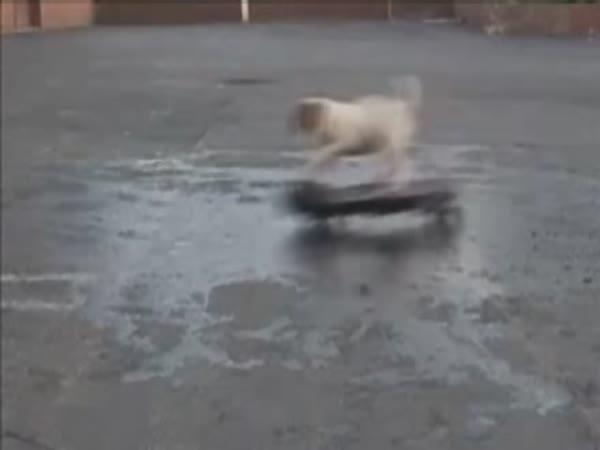 Pejsci umí na skateboardu