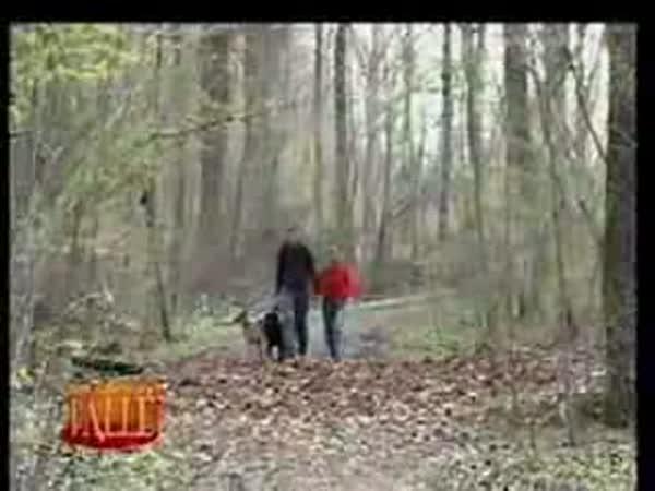 Vynikající nachytávka v lese [skrytá kamera]