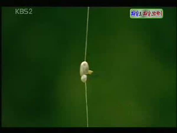 Japonsko - Jak trénují lukostřelci