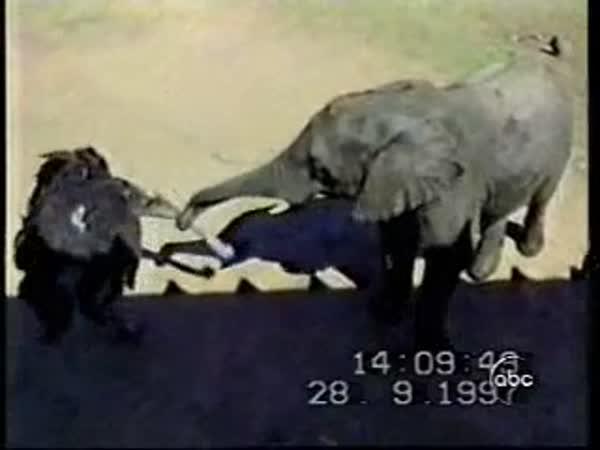 Pštros a slon