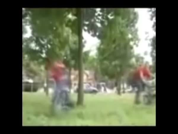 Idioti pro dnešní den V. - strom
