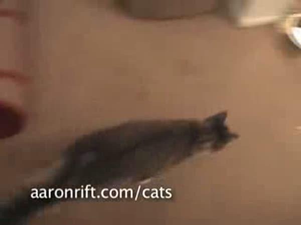 Kočky a laser