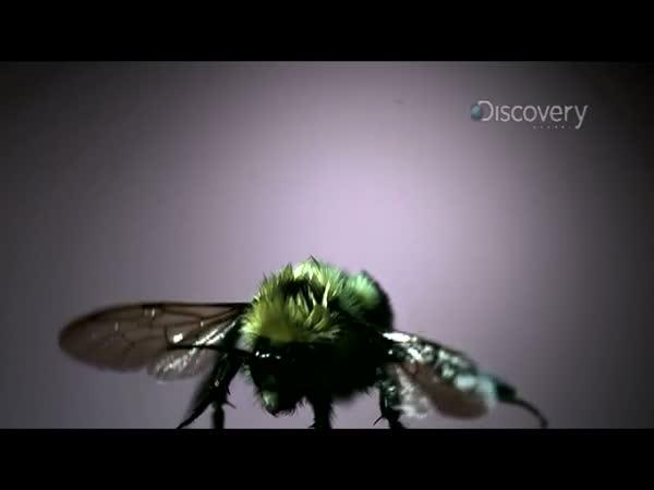 Slow Motion - Vosí křídla