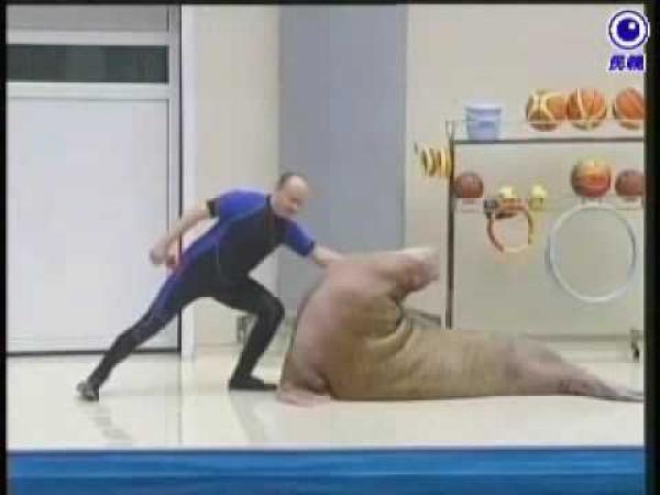Show s tuleněm