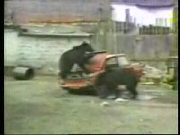 Medvědi zavedli šrotovné
