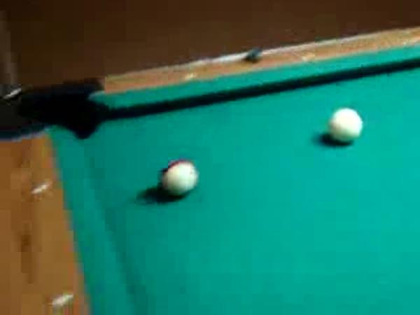 Pejsek umí hrát kulečník