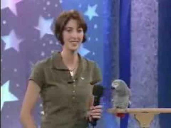Papoušek napodobuje zvířátka