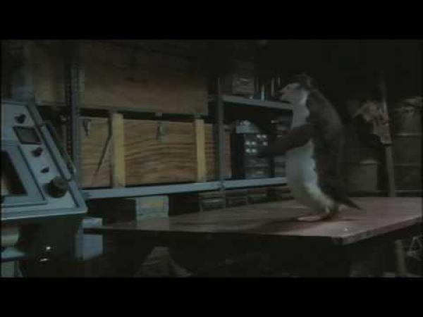 Tučňák umí hrát stolní tenis [reklama]