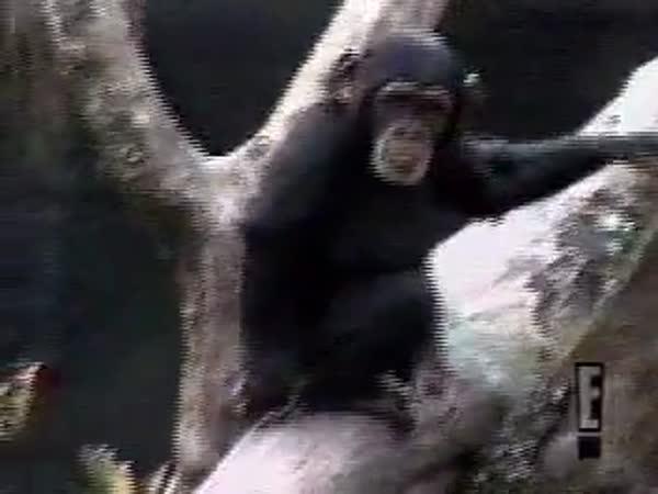 Opička - Nestrkej prsty, kam nemáš!