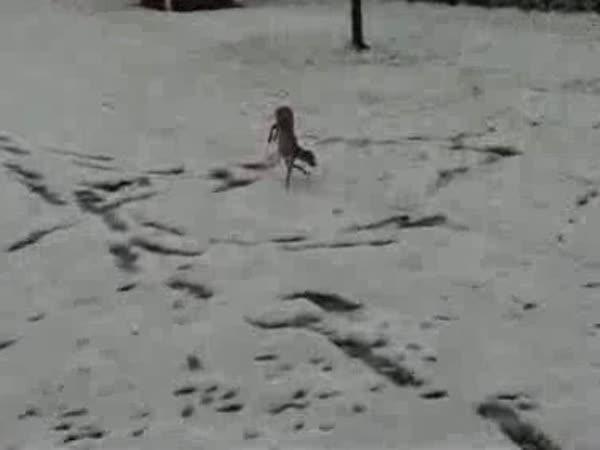 Pejsek , který nemá rád sníh