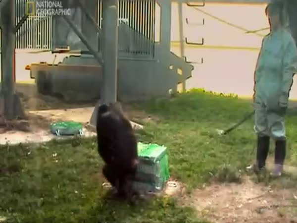 Opice umí spolupracovat