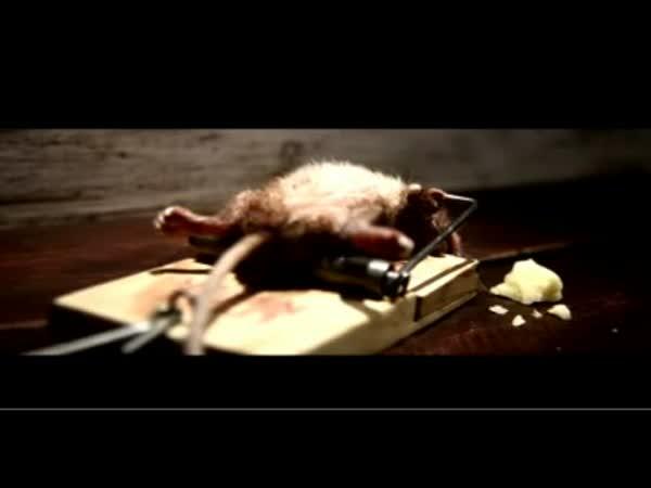 Myš v tréninku