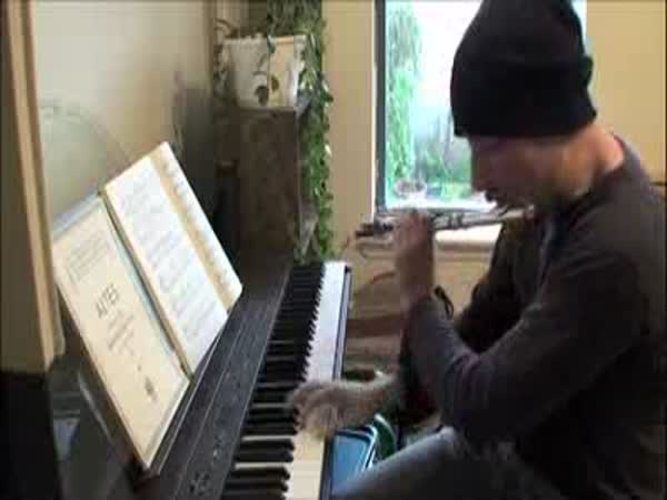 Borec - Klávesy + flétna + beatbox