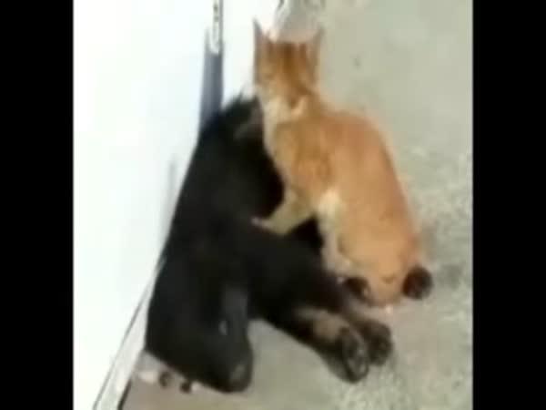 Pejsek a Kočička - Luxusní masáž
