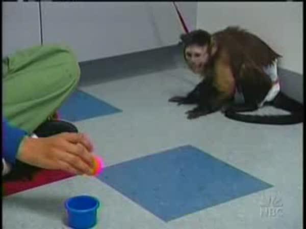 Opička pomáhá postiženým lidem